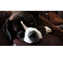 Arwen -Boxer Dogs Series- Update Photographic Print