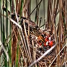 Feeding Time in the Marsh by Larry Trupp