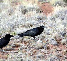 Common Ravens by Dave & Trena Puckett