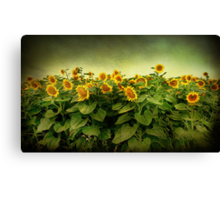 Field of Gold . Canvas Print