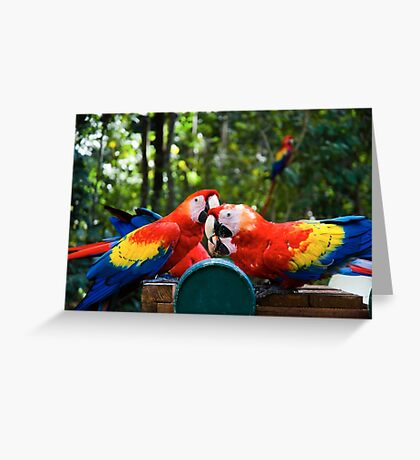 Eating birds Greeting Card