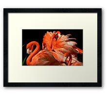A Bouquet of Fluffy Flamingoes Framed Print