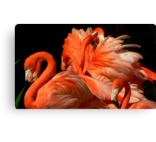 A Bouquet of Fluffy Flamingoes Canvas Print