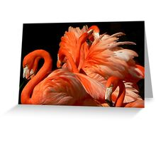 A Bouquet of Fluffy Flamingoes Greeting Card