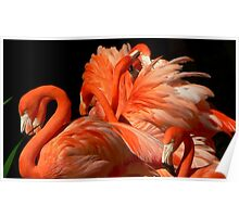 A Bouquet of Fluffy Flamingoes Poster