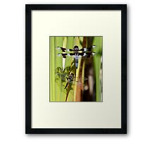 Skimmers are Great With Four Spots or Eight Framed Print