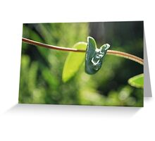 captured rain  Greeting Card