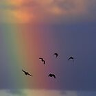 Rainbow birds by Penny Kittel