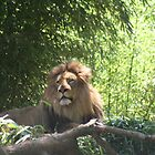 King of the Zoo by buster51003