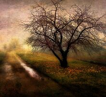 To the Orchard by Patrick  McMullen