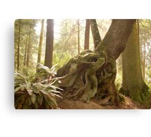 Narly old tree, Whidby Isl. Canvas Print