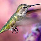Hummingbird on the pink by loiteke