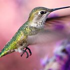 Hummingbird on the pink by loiteke