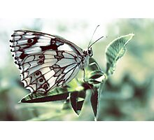 Butterfly in the grass Photographic Print