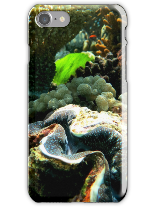 Giant Clam by SHappe