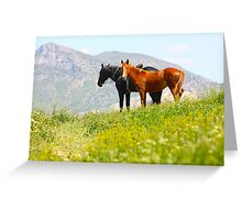 Black and red horses in the mountains Greeting Card