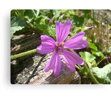 Pretty Purple Plant Canvas Print