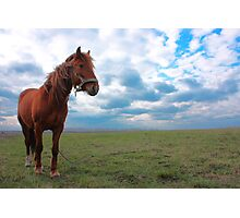 Horse Grazing in a field Photographic Print