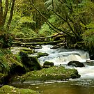 Golitha falls by Russell Couch