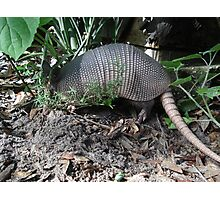 Armadillo Photographic Print