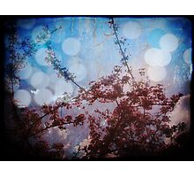 through the eyes of someone that can see more of the light than the rest Photographic Print