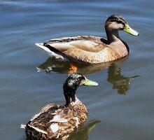 Two Ducks  by Darlene Bayne