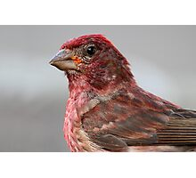 A Close Encounter Of The Bird Kind / Purple Finch Photographic Print