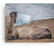 Power Napping Canvas Print