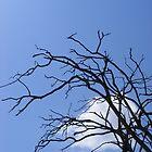 Kenyan Safari Tree Mombassa by MrEyedea