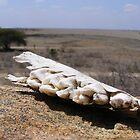 Jaw'd Horizon Tsavo National Park by MrEyedea