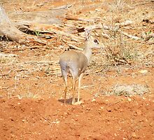 Tsavo East  by MrEyedea