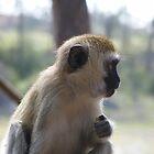Kenya Monkey #1 Mombassa by MrEyedea