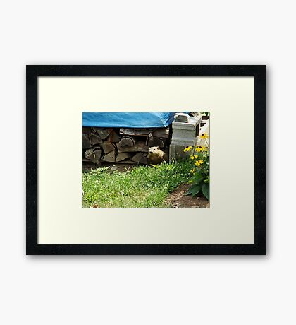 How Much Wood Can This Woodchuck Chuck? Framed Print