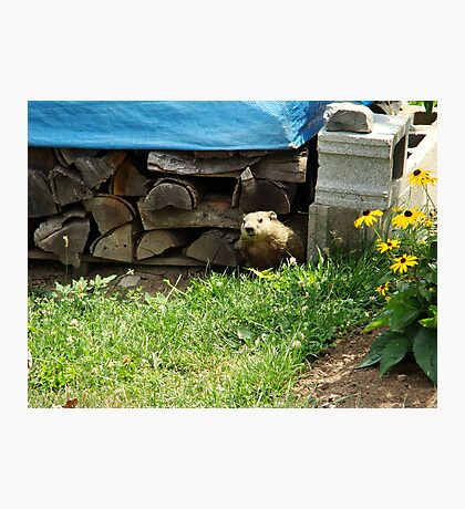 How Much Wood Can This Woodchuck Chuck? Photographic Print