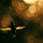 Beautiful Bokeh ChupaRosa by CheyAnne Sexton
