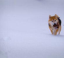 winter by Aline Leite