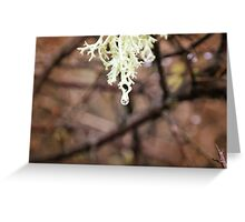 Winter Moss Greeting Card