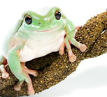 Smiling frog by Arek Rainczuk