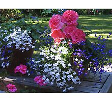 Bright and Beautiful! Photographic Print