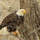The bald eagle inColorado snow #4 by jeff welton