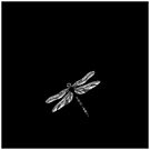 dragonfly in black by cathyjacobs