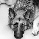 Waiting Wolf by grannyshot