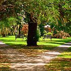 Small Triangle Park In New Orleans  by Wanda Raines