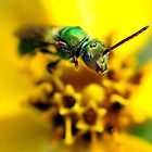 Green Metalic Bee by Dennis Stewart