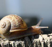Snail  by Jodie Bennett