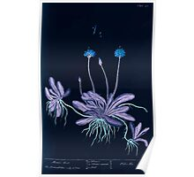 A curious herbal Elisabeth Blackwell John Norse Samuel Harding 1739 0290 Mouse Ear Inverted Poster