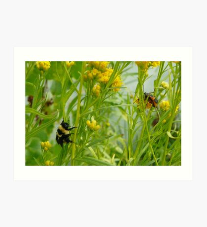 Bumble Bee Watching Bug Love Art Print