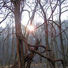 morning sun thru the tree by bdorlac