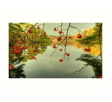 The Red Berries of Autumn Art Print
