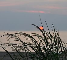 Shore Grass at Sunrise by Corkle